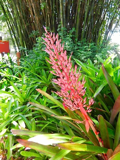 16-09 FLOWER1