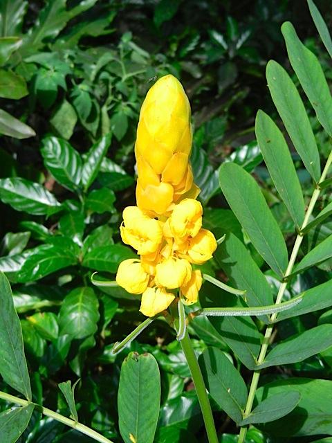 16-09 FLOWER2
